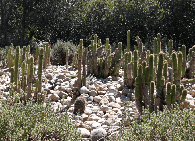 Because of the drought, I am always looking for  desert-scape  ideas.  This garden is striking, isn't it?