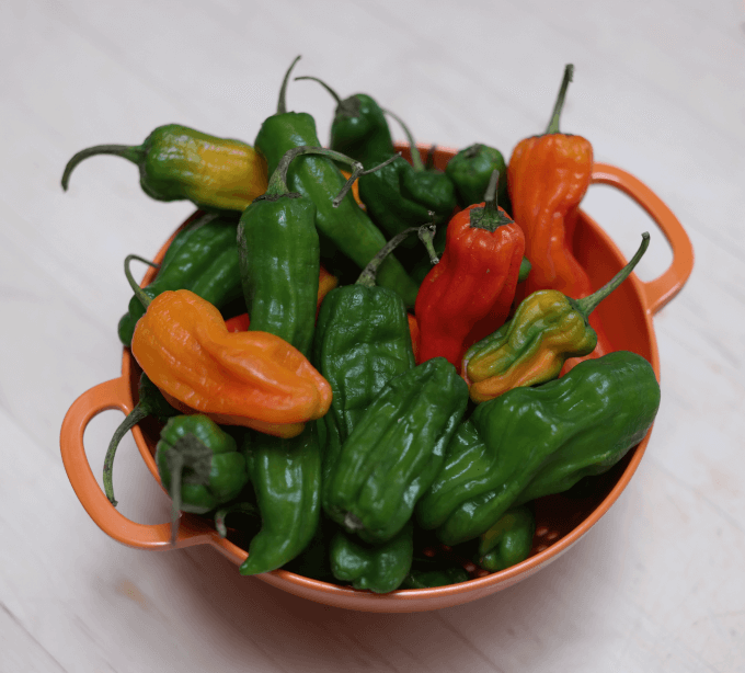 Wash and dry your peppers.  Wet peppers will splatter when they hit the hot oil.