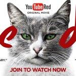 Here Kedi, Kedi (meow)